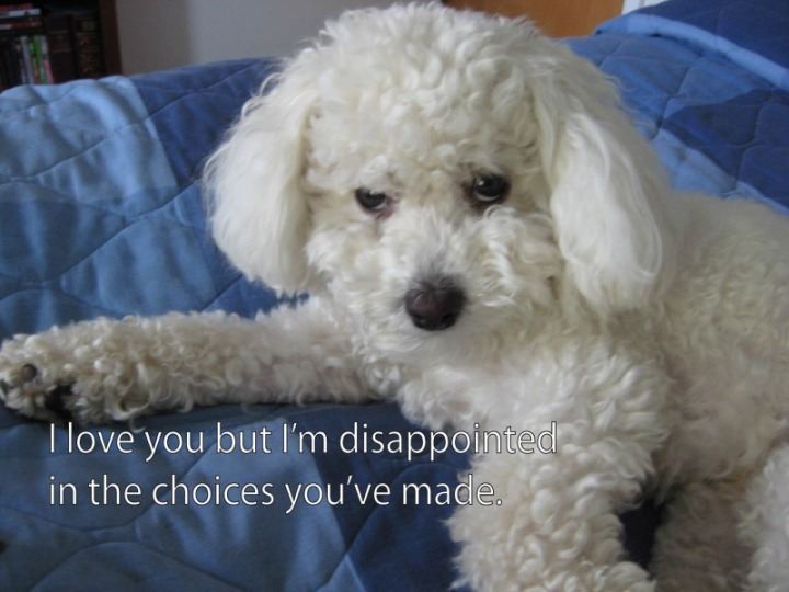 poodle dog son disappointed love choices image macro