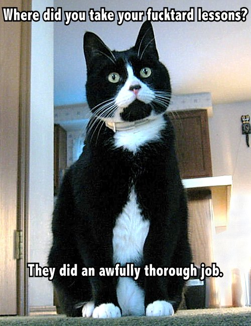 black white cat sarcastic insult cat macro