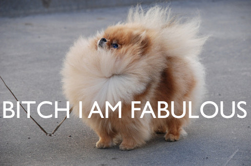 small_dog_fabulous_bitch_fantastic_awesome_fluffy_image-macro