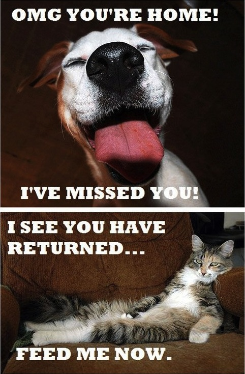 dogs_versus_cats_enthusiastic_chilled_nonchalant_image_macro